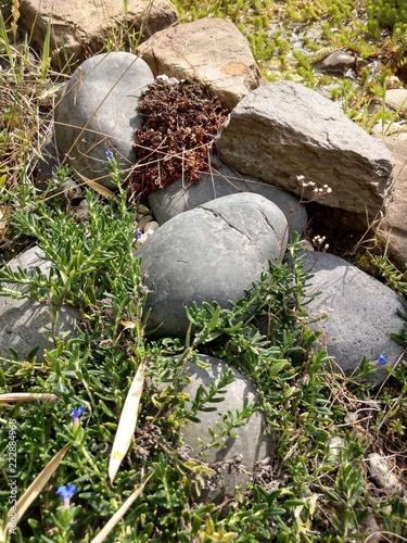 Fotografie, Obraz  Steine am Teichufer an einem sonnigen Tag in stiller Natur