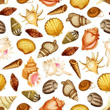 Sea Shell Seamless Pattern With Marine Mollusk