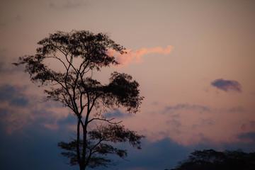 Fototapeta paisagem