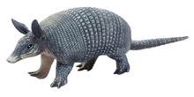 Toy Armadillo. Isolated.