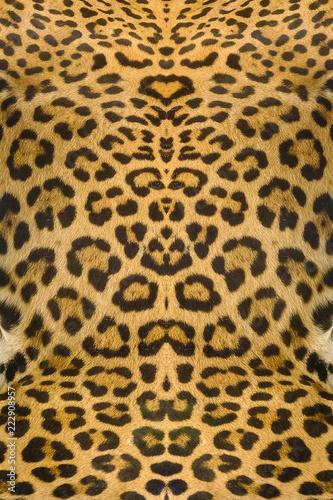 Deurstickers Luipaard leopard and ocelot skin texture background