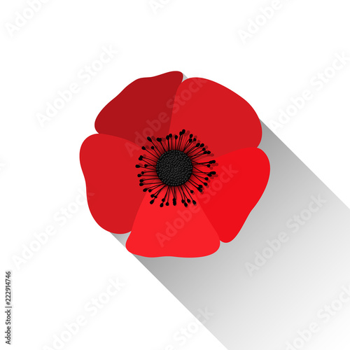 fototapeta na ścianę Red Poppy Flower