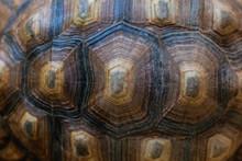Tortoise Shell Texture