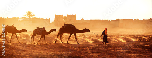 Photo sur Aluminium Maroc Caravan of camels in Sahara desert, Morocco