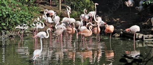Foto op Aluminium Flamingo Flamant rose