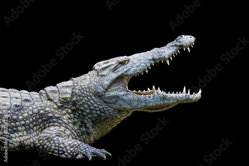 Tuinposter Krokodil Crocodile on black background