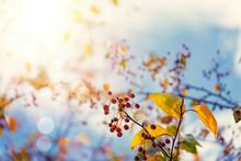 Colorful Autumn Tree Leaves Ov...