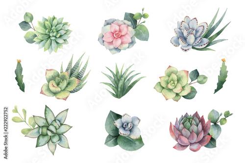 Fototapeta Watercolor vector set with eucalyptus leaves and succulents. obraz