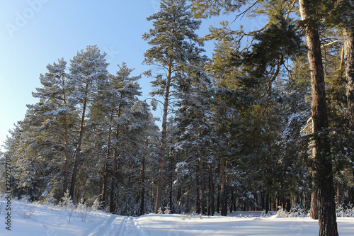 Foto op Aluminium Grijze traf. winter landscape with trees and snow