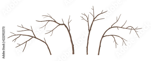 Fotografia  Vector Tree Branches