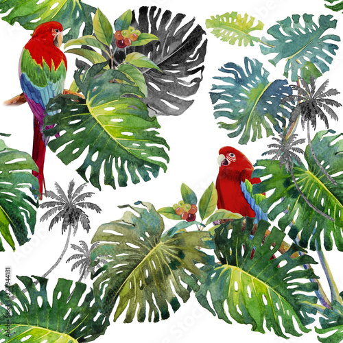 Foto auf AluDibond Ziehen Tropical Leaves of monstera and Macaw bird.