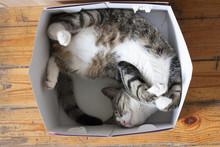 Смешной кот спит...