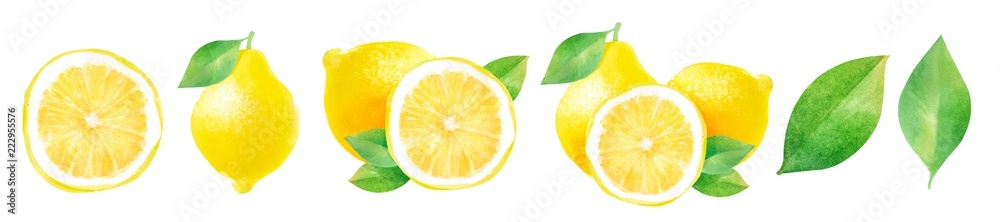 Fototapeta lemons and half a lemon, watercolor hand-drawn drawing of a fruits, isolated illustration on a white background