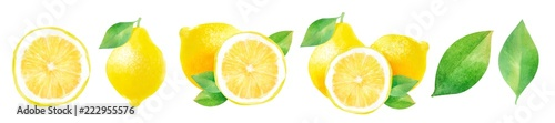 lemons and half a lemon, watercolor hand-drawn drawing of a fruits, isolated illustration on a white background