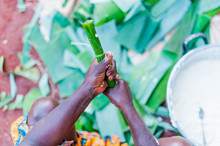 Close Up Of African Woman Hands Making Traditonal Cameroonian Baton De Manioc With Manioca And Plantain Leaves
