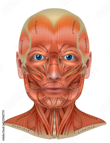 Head, face and neck muscles anatomy diagram with names Tablou Canvas