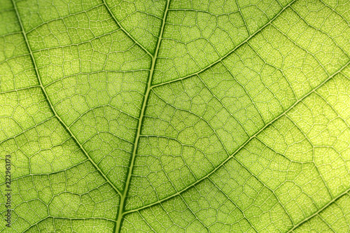 Garden Poster Decorative skeleton leaves Closeup of green leaf