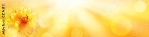Goldener Herbst Hintergrund  -  Biene auf Dahlie