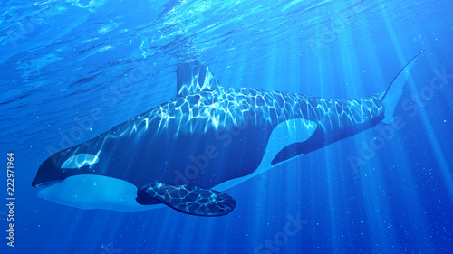 Fotografie, Obraz 3d rendered illustration of an orca