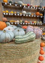 Pumpkin And Squash Display In The Fall On A Bale Of Hay- Celebration,  Halloween, And Thanksgiving