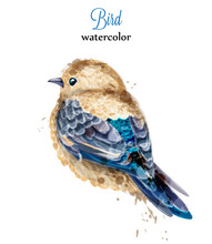 Watercolor Bird Vector. Colorf...