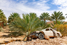 Abandoned Dusted Wreck Of Crashed Passanger Car Near Date Palm Tree Plantation