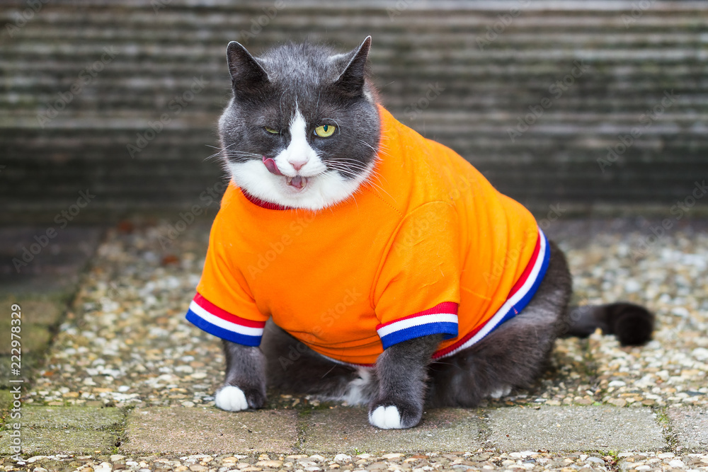 Random image of a fat pussy cat dressed as soccer player for the dutch national team relaxing in the garden in spring in the Netherlands