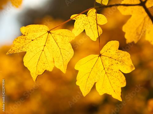 Fototapeta Autumn splendor obraz