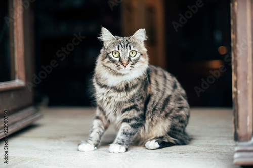 Cat with green eyes on street