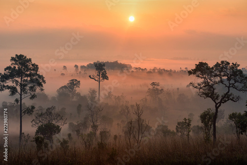 Fotobehang Zwavel geel Beautiful forest landscape of foggy sunrise in Thung salaeng Luang National Park, Thailand