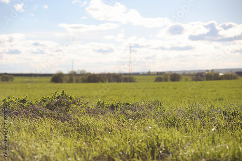 Fotobehang Wit Landscape is summer. Green trees and grass in a countryside land