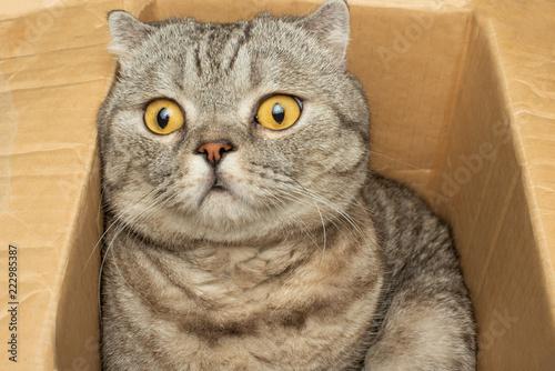 Foto  Cute cat in cardboard box