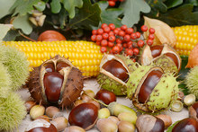 Autumn Fruits From Chestnuts, ...
