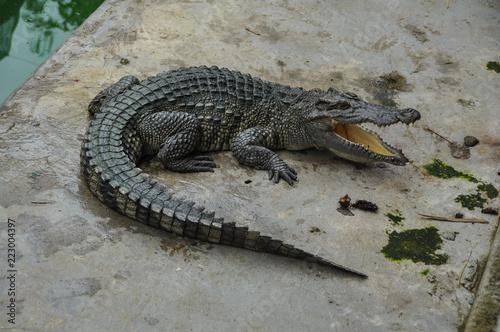 Foto op Plexiglas Krokodil A hungry crocodile in Vietnam