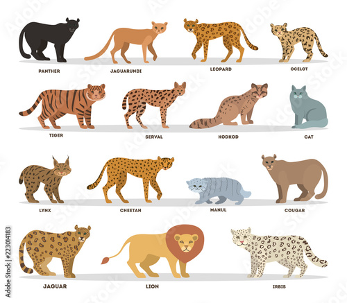 Naklejka premium Zestaw dzikich i dometycznych kotów. Kolekcja rodziny kotów