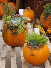 Fall Decoration Idea With Pump...
