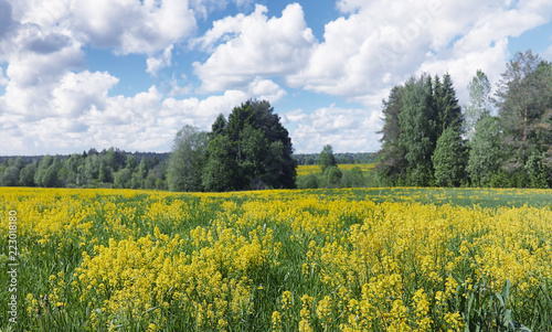 Foto op Canvas Khaki Landscape is summer. Green trees and grass in a countryside land