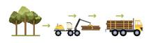 Wood Production Process. Cutti...