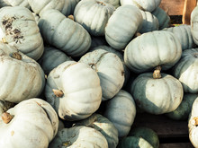 Image Of Close Up View On Crown-prince Pumpkins