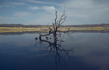 Dead Leafless Tree In Middle Of Lake