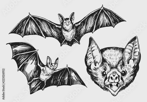 Canvas Set of bat. Hand drawn sketch converted to vector.