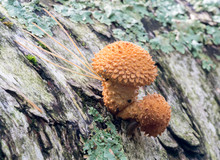 Unusual, Orange Bumpy Mushroom...