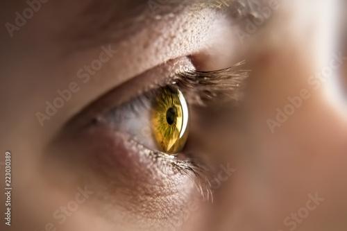 Leinwand Poster honey colored eye iris