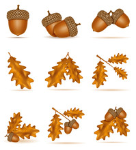 Set Icons Autumn Oak Acorns With Leaves Vector Illustration