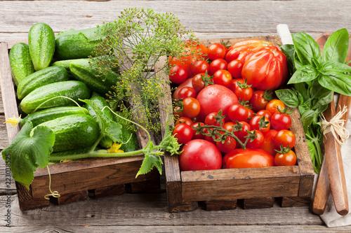 Fotobehang Groenten Fresh garden tomatoes and cucumbers