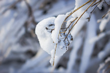 Branch Of A Tree Covered With Snow