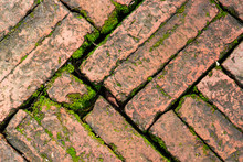 Bright Green Moss Growing On Brick Surface Old Red Block Paving Above A Sidewalk.