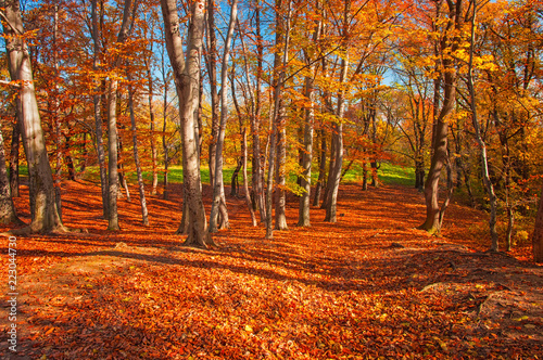 Poster de jardin Rouge mauve Pathway in the forest in autumn