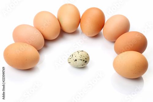 chicken eggs chicken around quail egg on white background