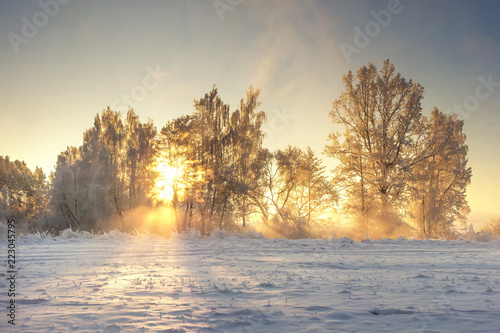 Keuken foto achterwand Zwavel geel Vivid winter landscape. Frosty nature with golden sunlight. Sunrays shining in morning frosty trees. Snowy wild nature cold landscape. Bright winter sunrise. Xmas time. January clean sunny weather.